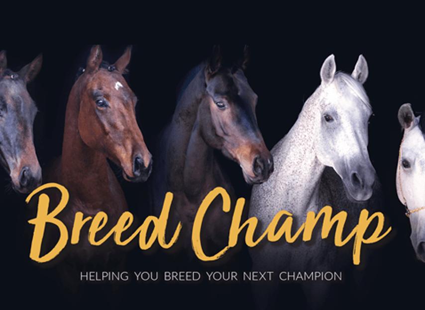 Breedchamp